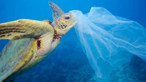 Meeresschildkröten sind von Plastikmüll bedroht © Solvin Zankl / Alamy Stock Photo